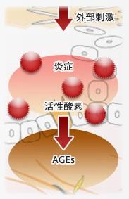 敏感肌特有の肌の糖化