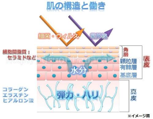角質層の保湿 肌トラブル回避