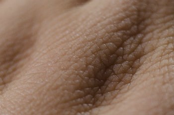 皮膚の構造と厚さ